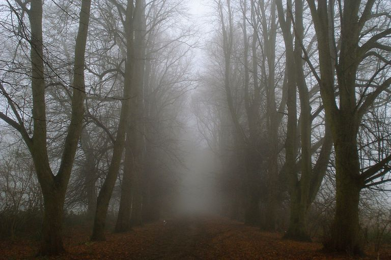 A bleak forest in the winter