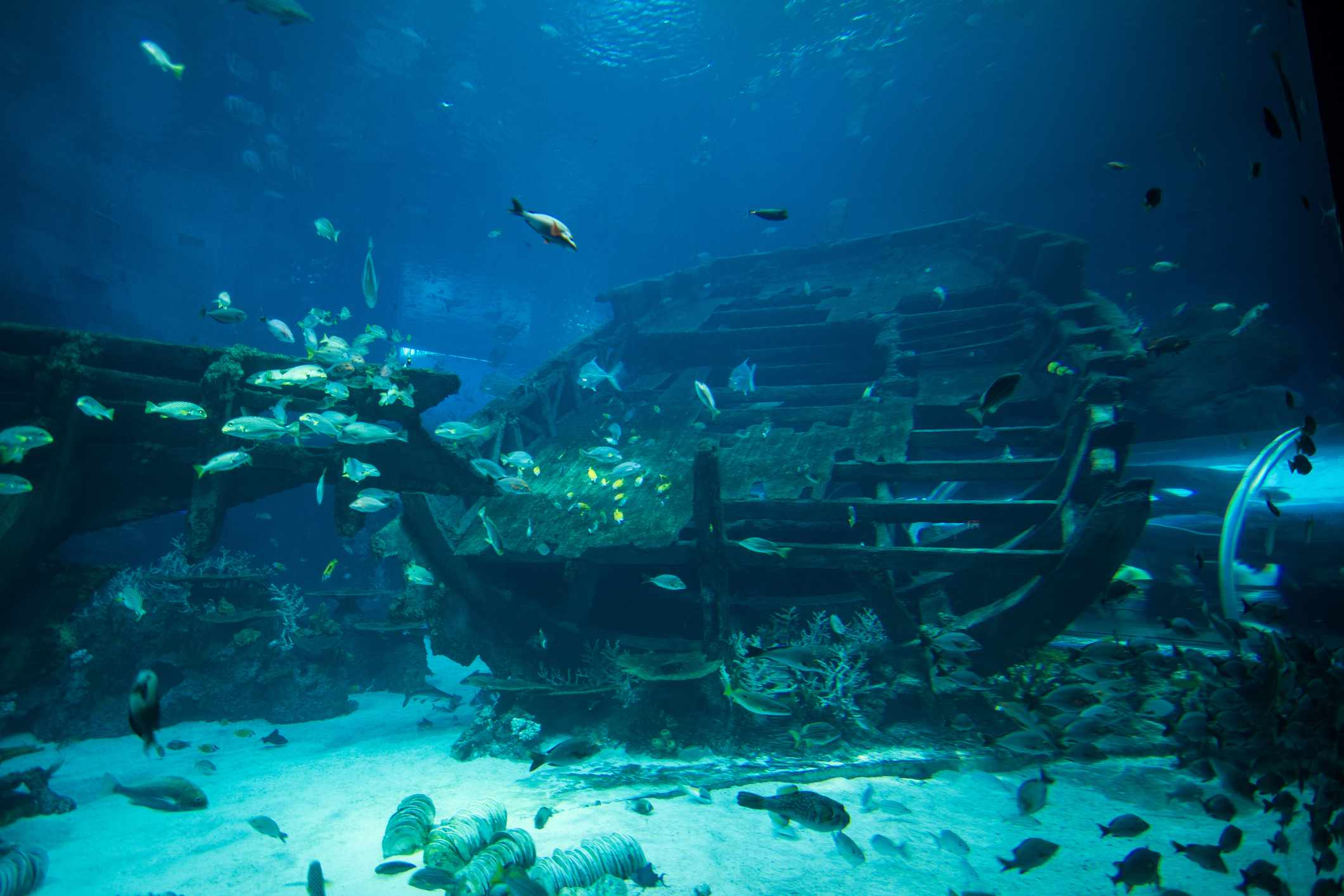 Underwater artificial reef filled with fish set on white sand at S.E.A. Aquarium in Singapore
