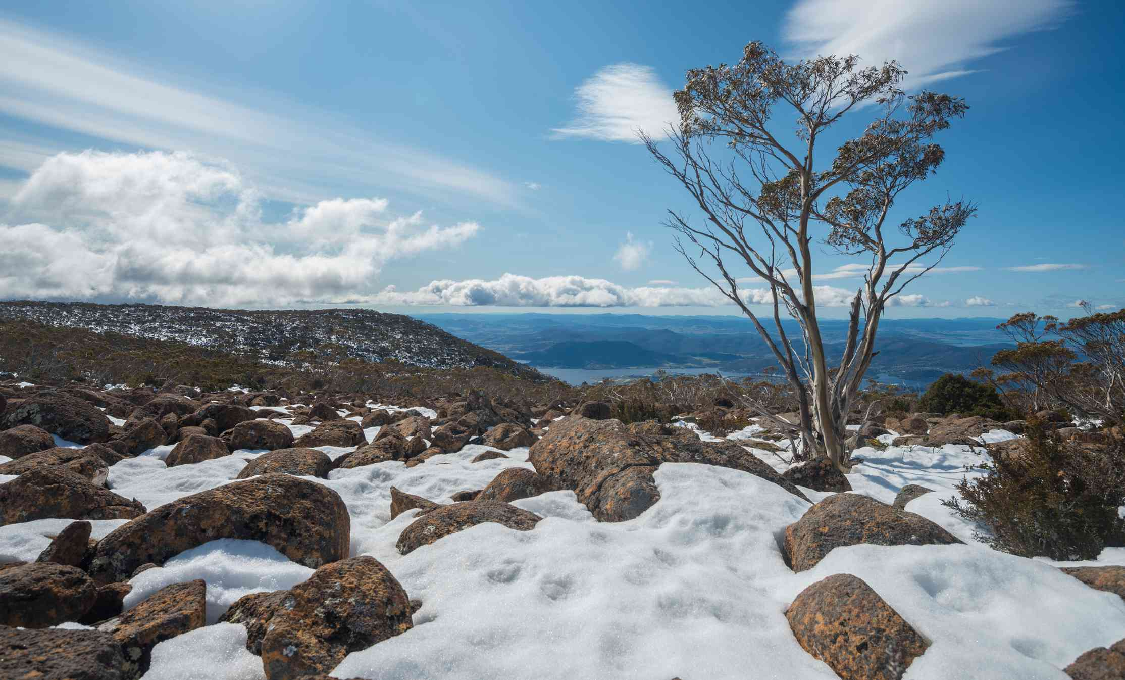 View from the top of Mount Wellington covered partially in white snow and rocks with a single tree under a sunny blue sky with a few white clouds