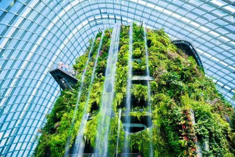 Indoor conservatory with tall trees