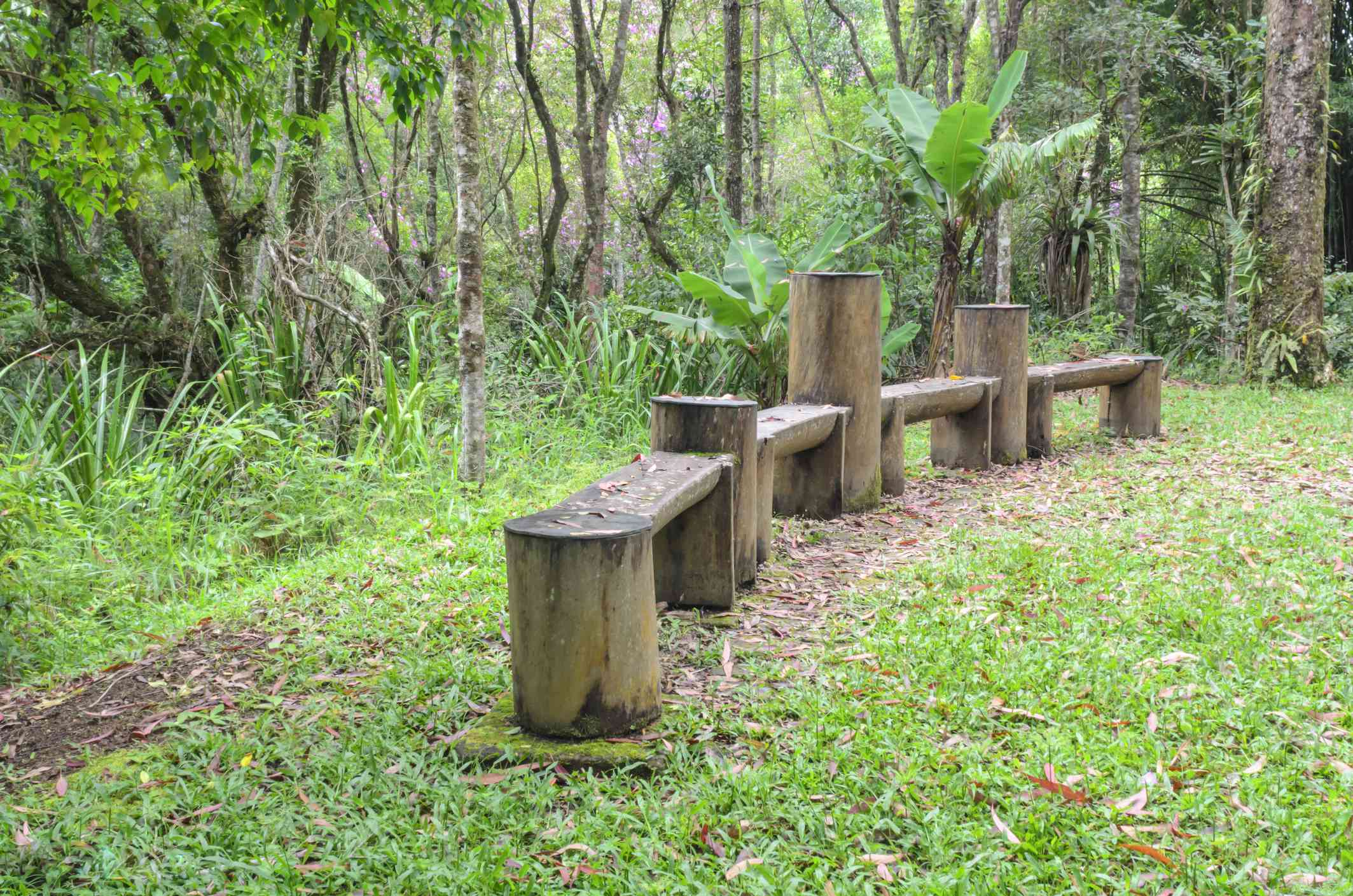 Handmade wooden bench made from a dead tree in a green forest