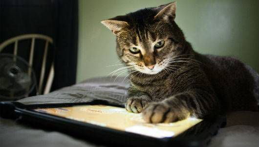 Cat with a tablet