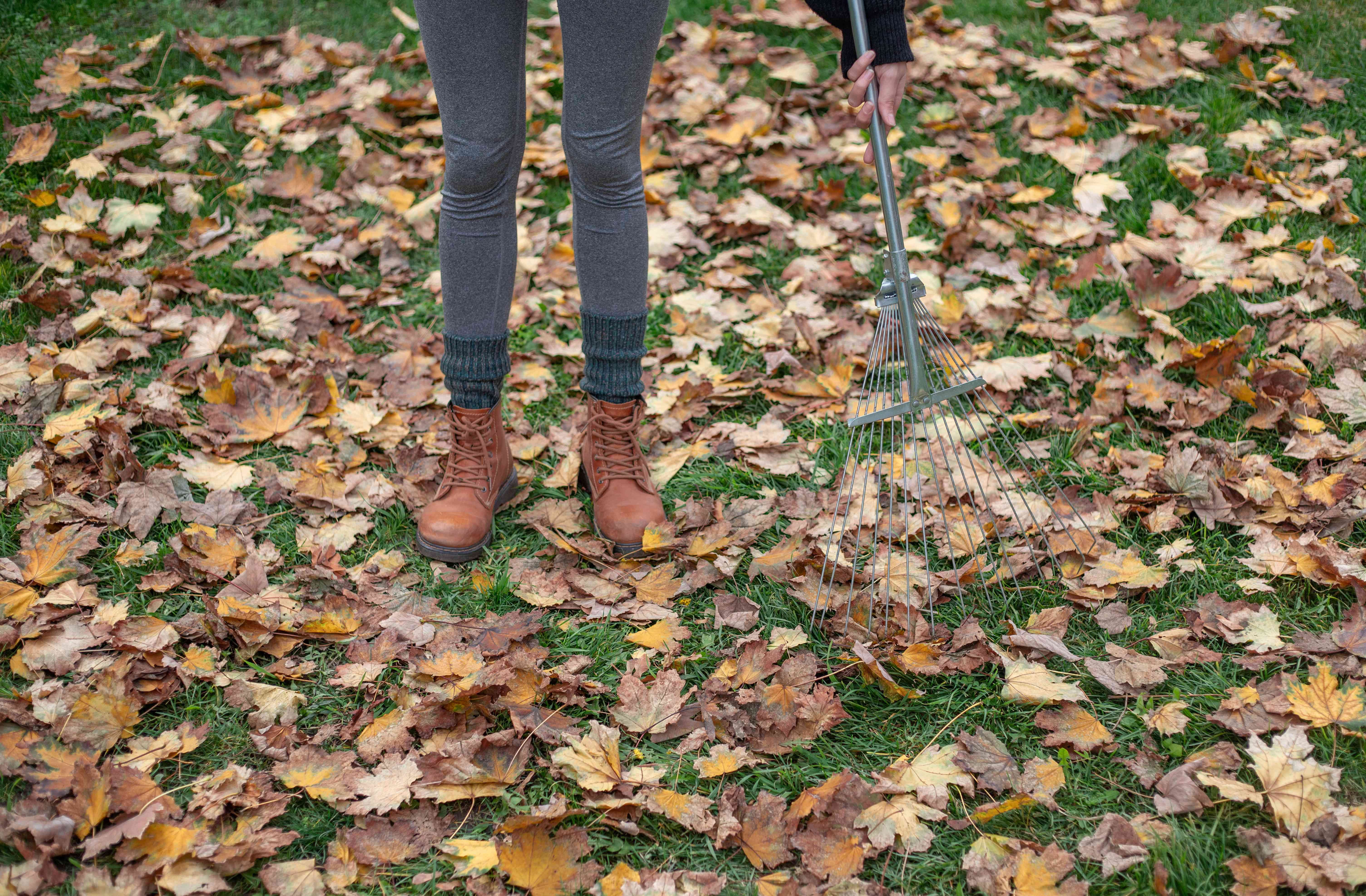 person stands on grassy lawn with leaves and rake