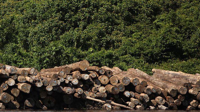 Cómo la destrucción de la selva tropical se esconde en nuestra ropa