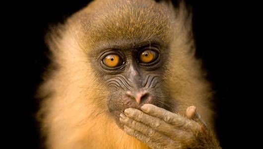 ¿Puede 1 hombre fotografiar todas las especies animales de la Tierra?