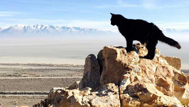 Millie the rock climbing cat