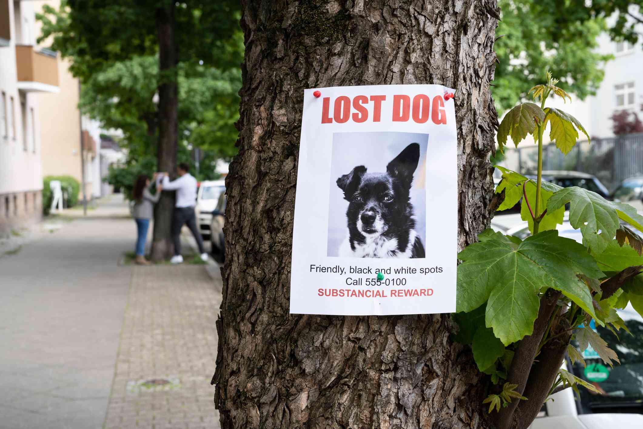 Lost dog poster on a tree.