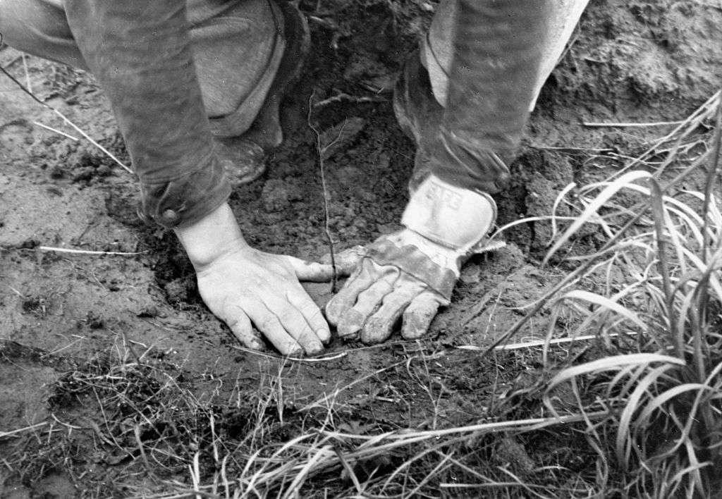 CCC planting Trees