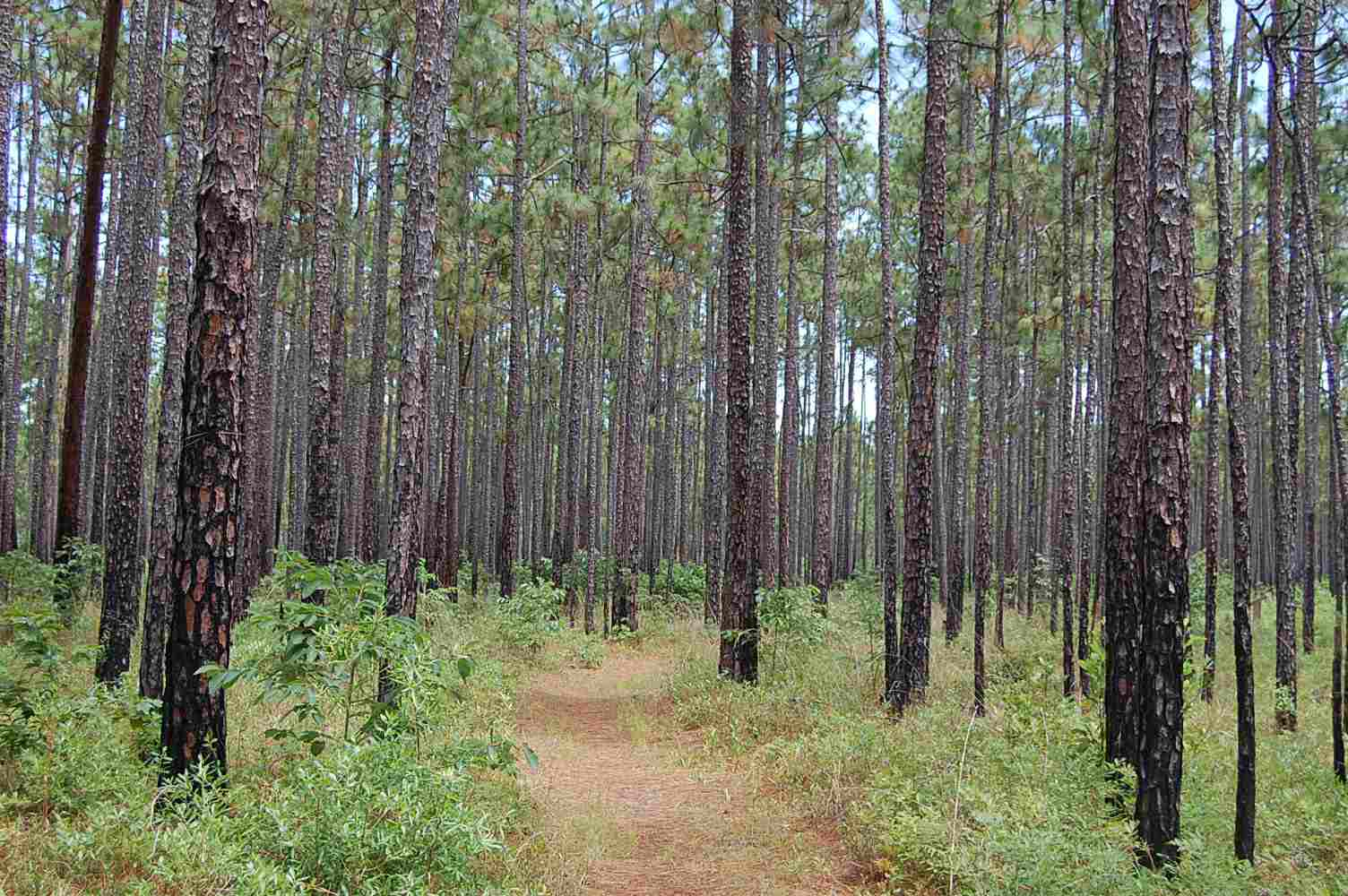 Francis Marion National Forest in South Carolina