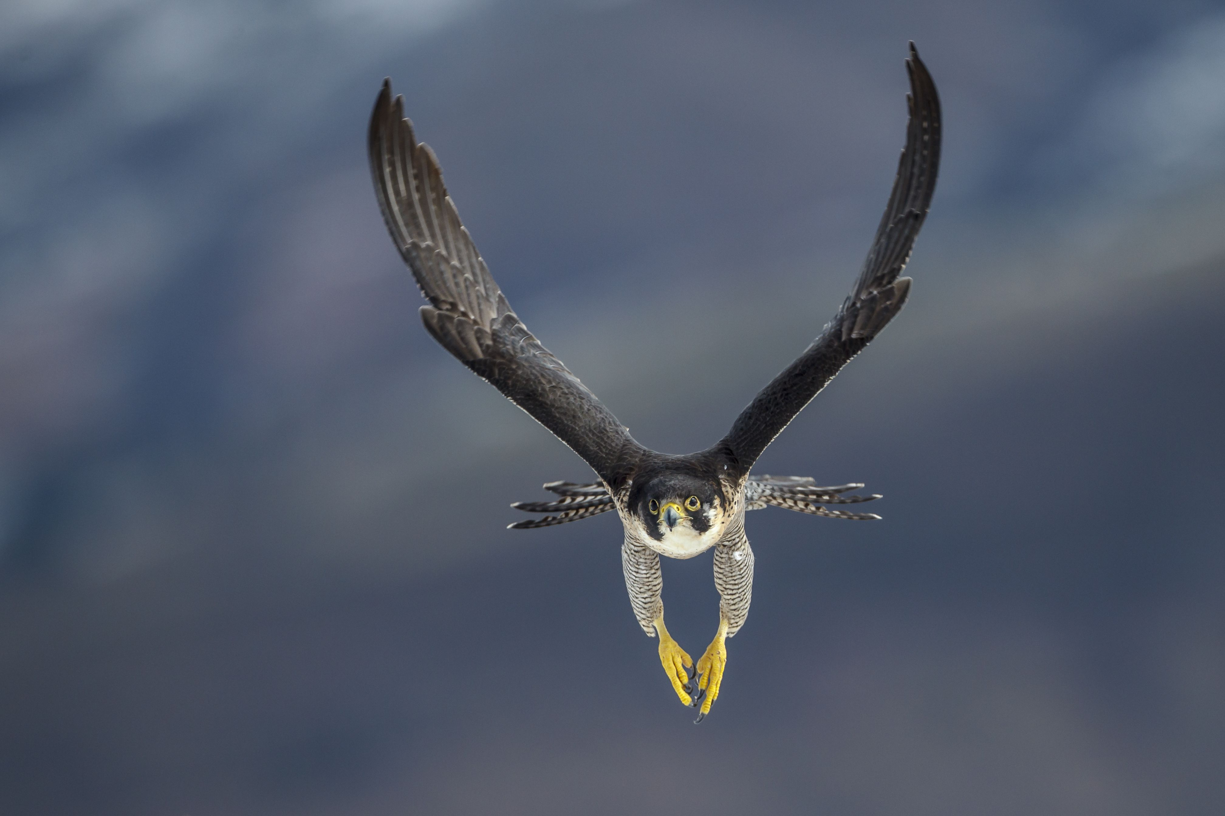 10 of the World's Fastest Birds