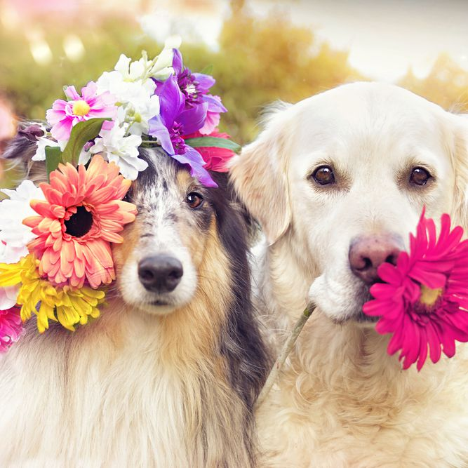 Flowers Names For Dogs