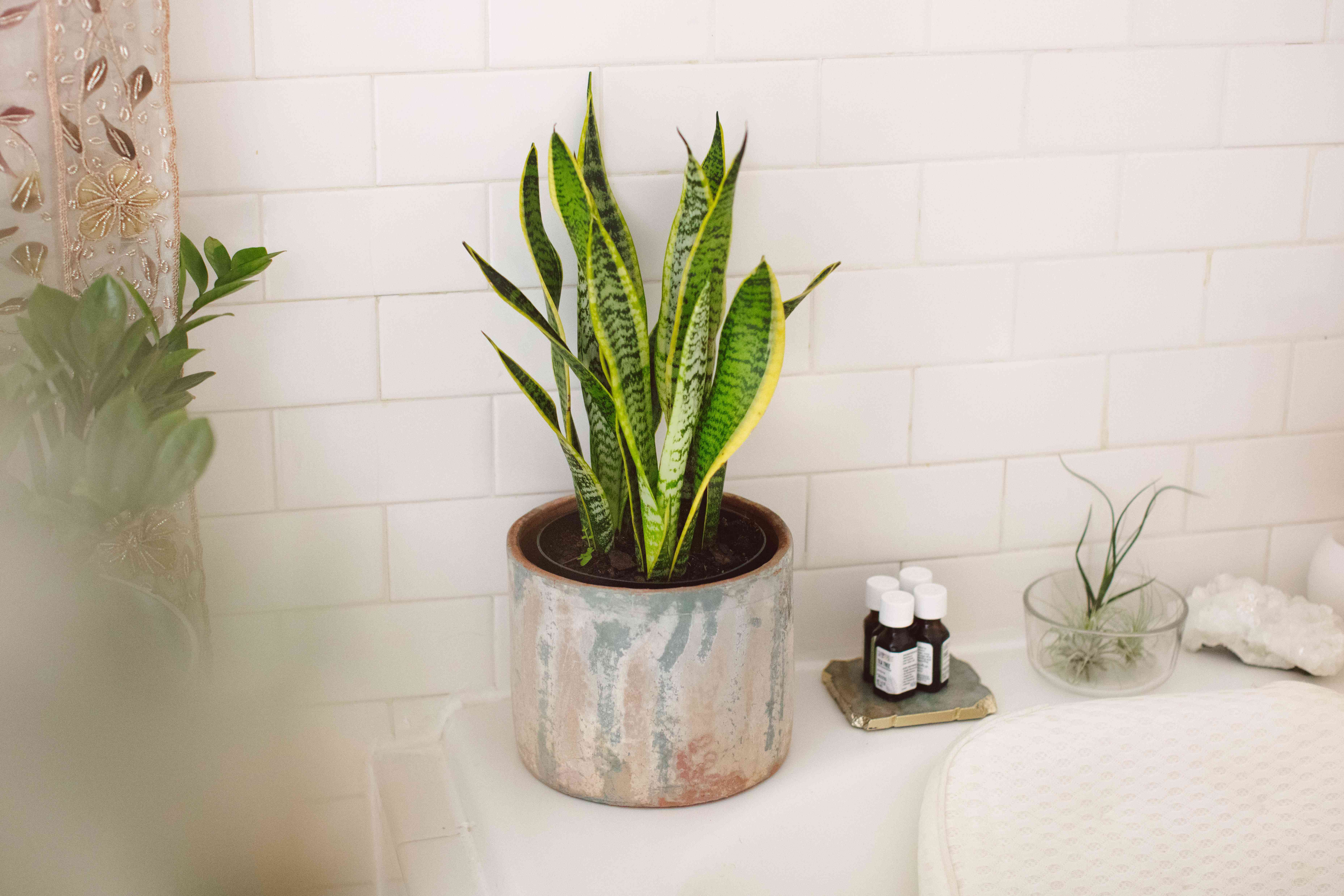 20 Shower Plants That Want to Live in Your Bathroom