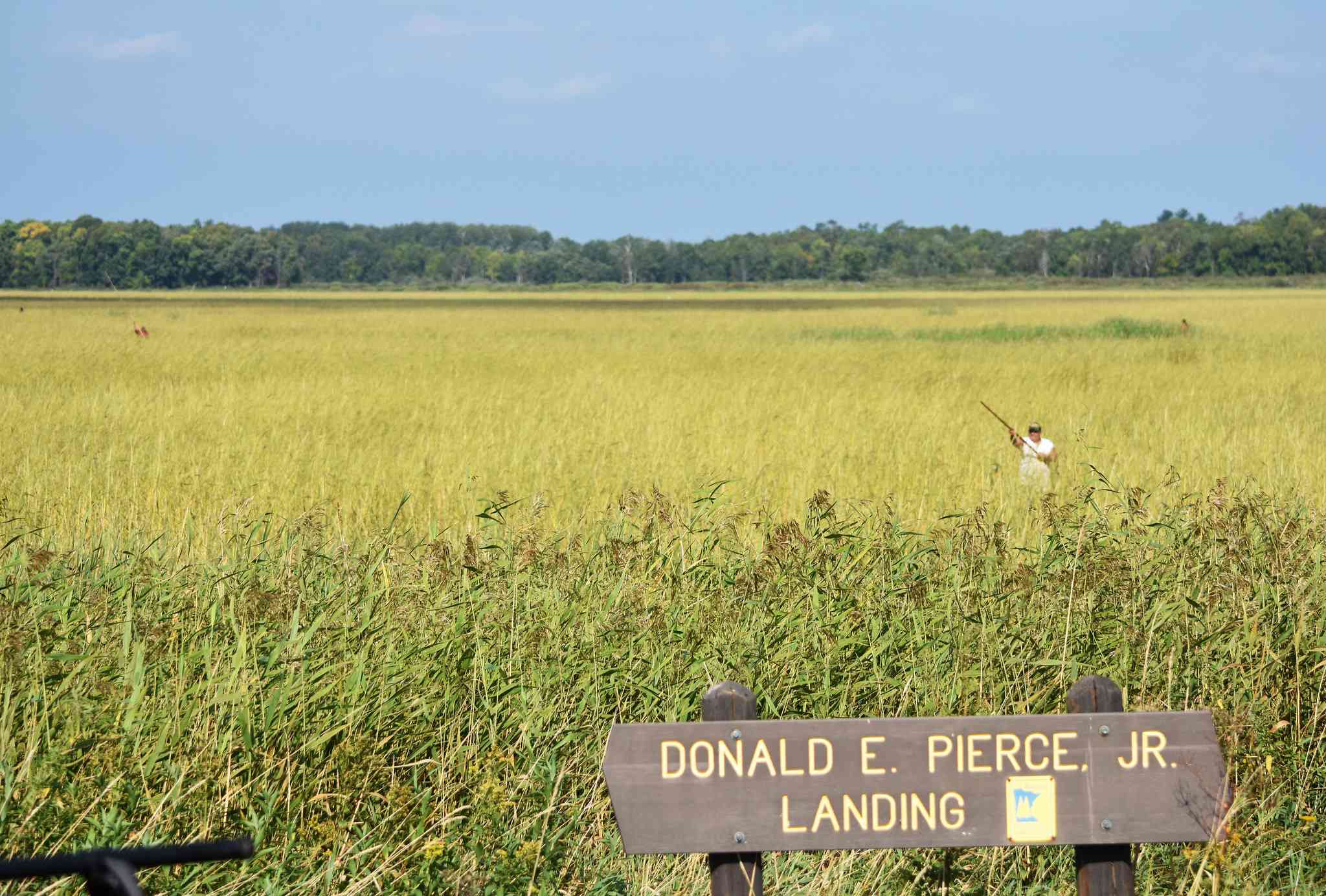 wild rice lake in Minnesota