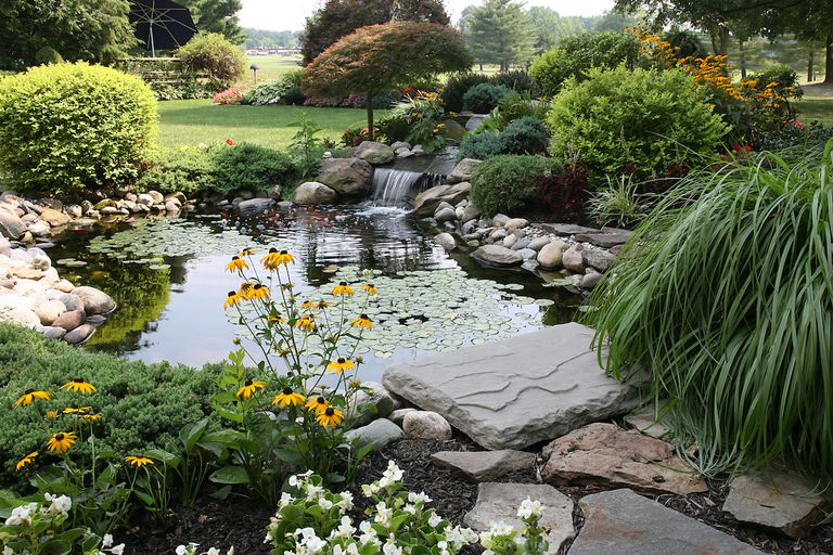 pond in backyard