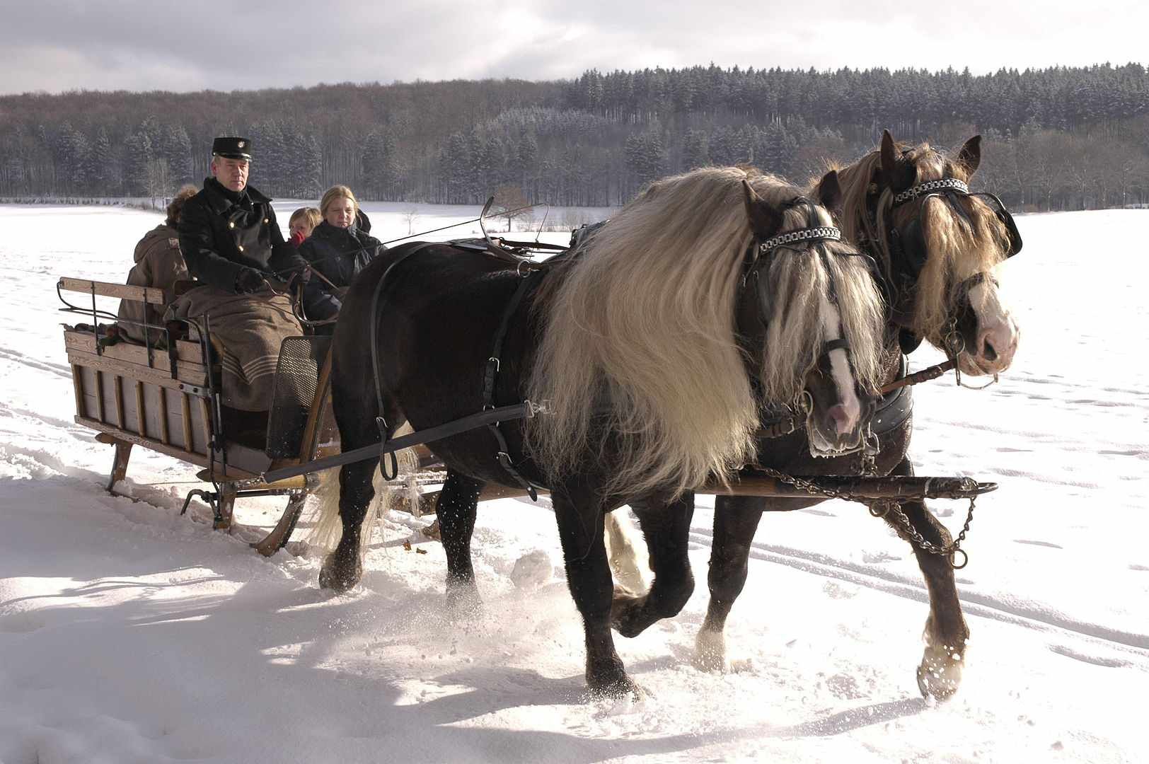 Two Black Forest horses pull a carriage with people in it