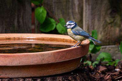 bird on edge of a birdbath