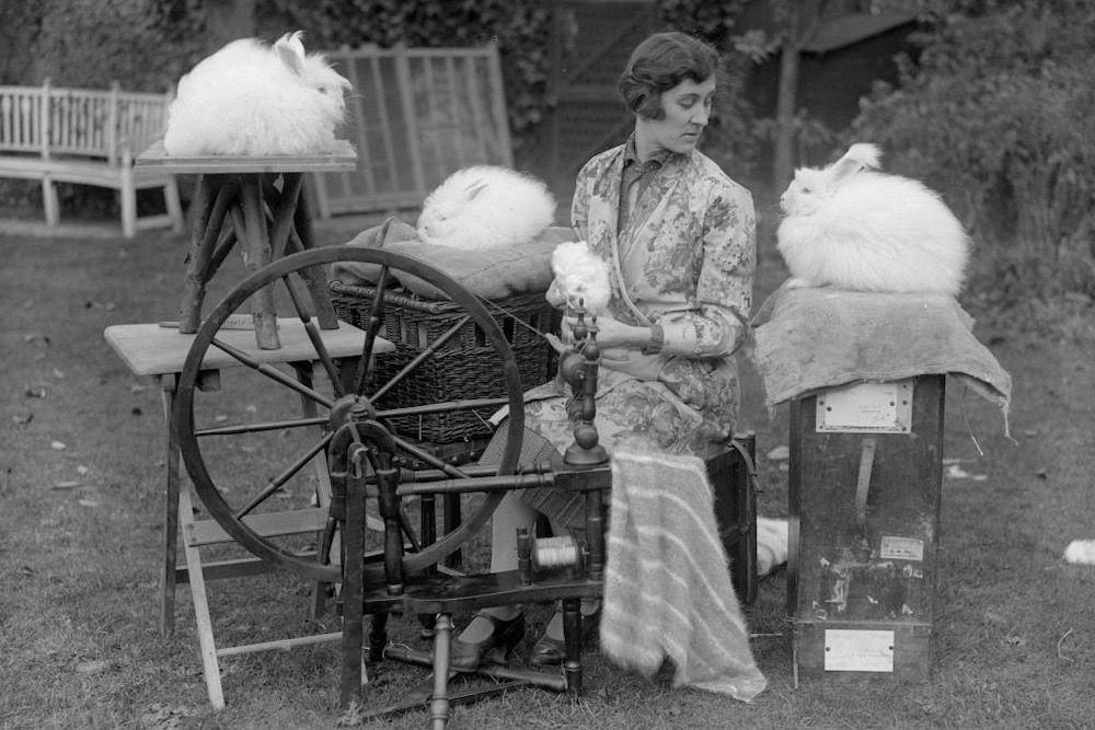 spinning Angora wool in garden