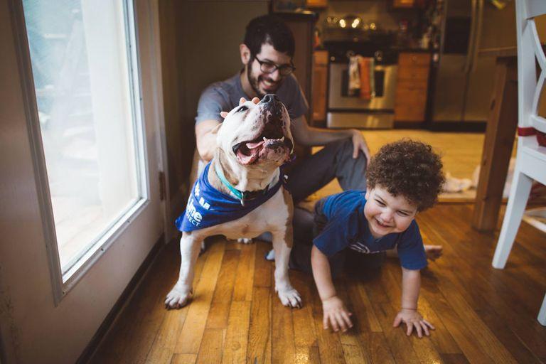 ¿Por qué no llevar un perro de refugio a casa durante las vacaciones?