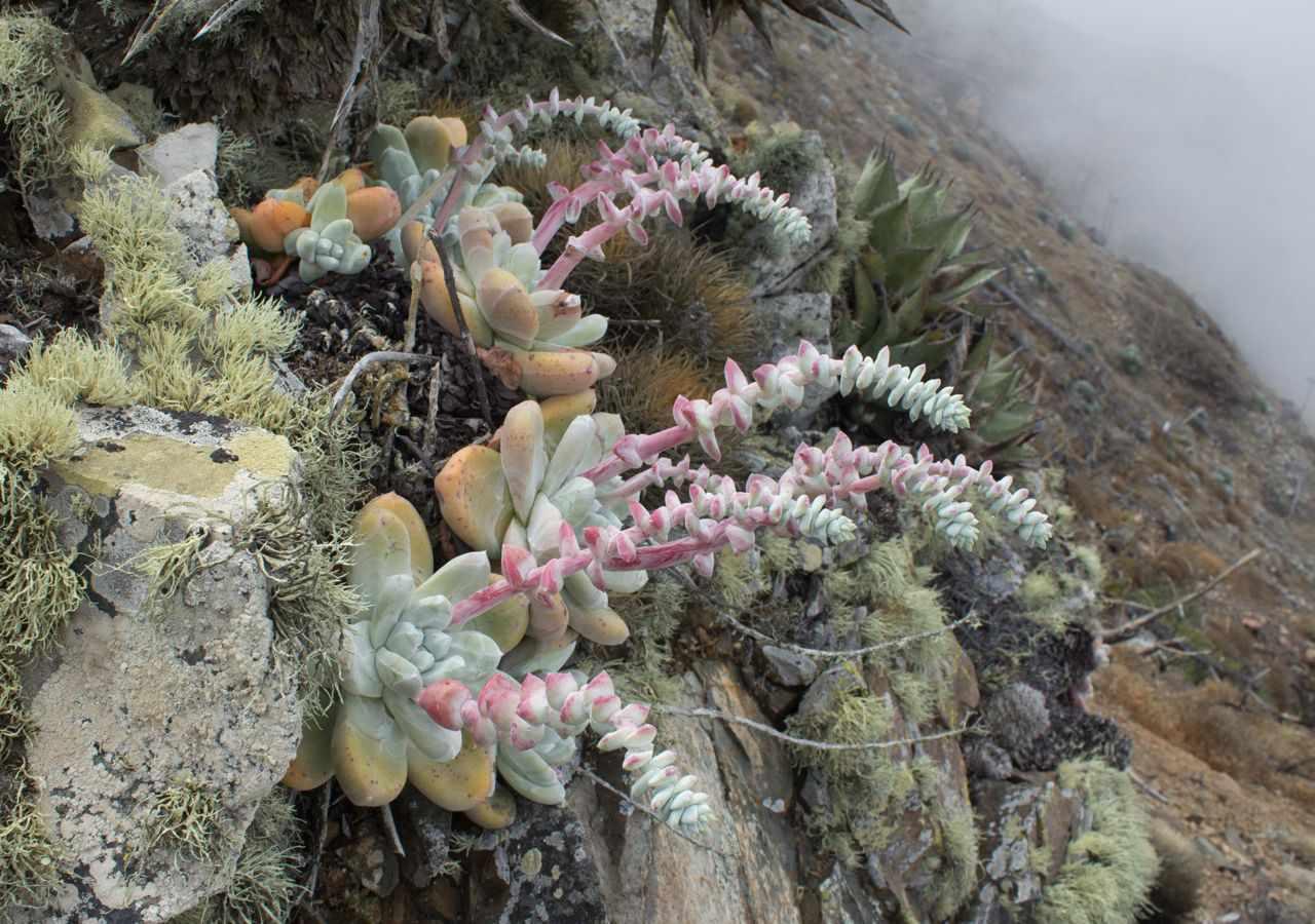 succulents in California