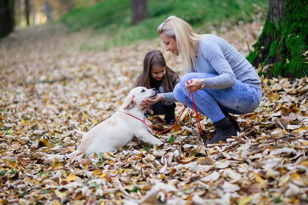woman greeting dog