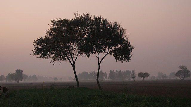 Los árboles pueden formar vínculos como una pareja de ancianos y cuidarse unos a otros