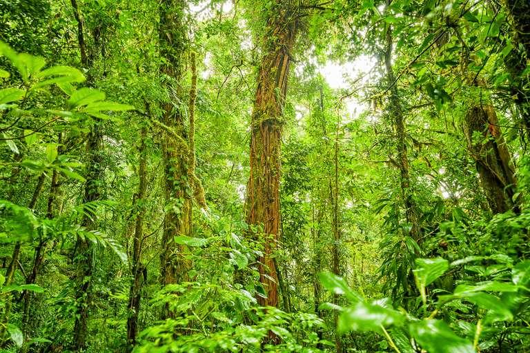 Costa Rica ha duplicado su cobertura forestal en los últimos 30 años
