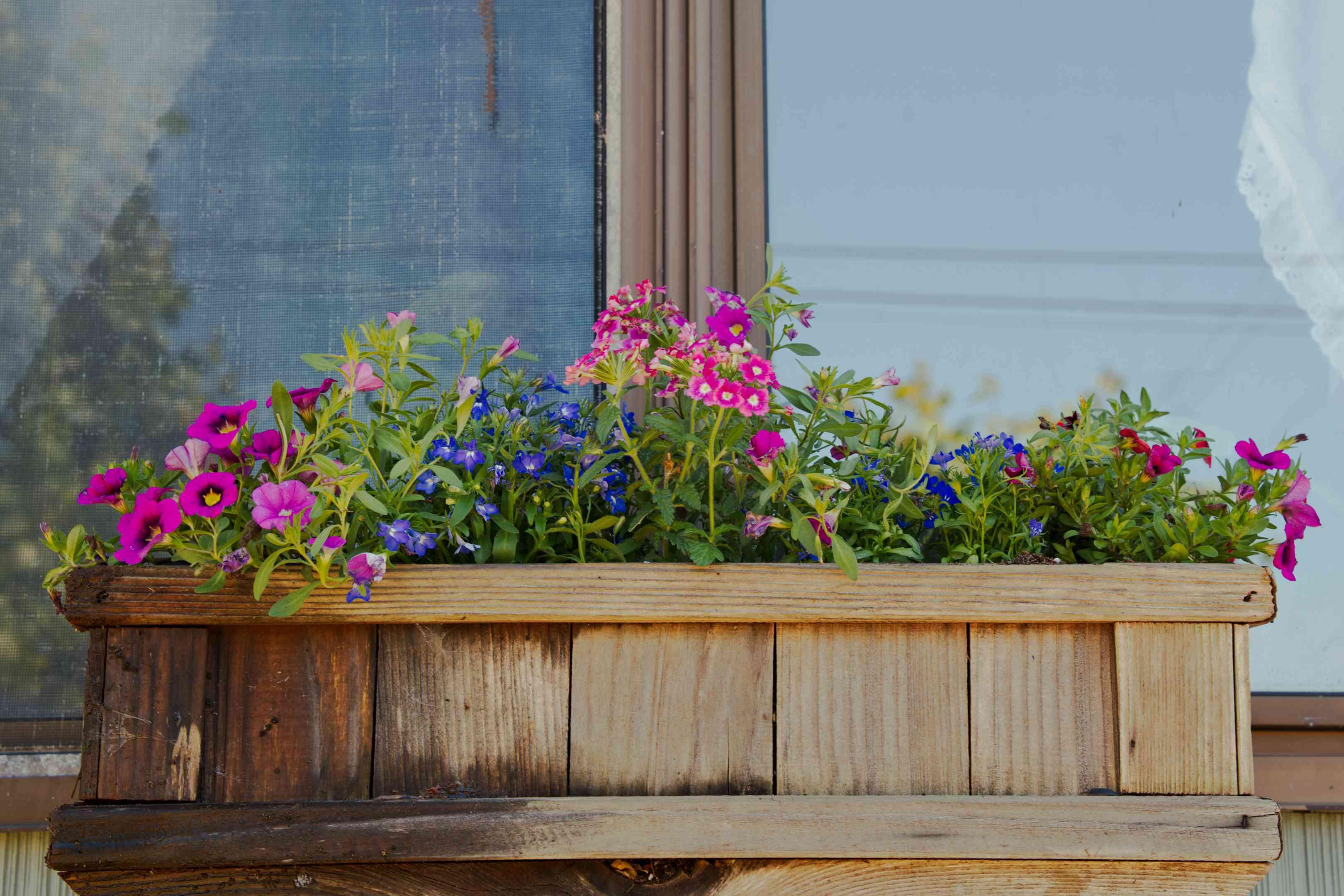 purple and blue flowers peek from wooden window box outside of house