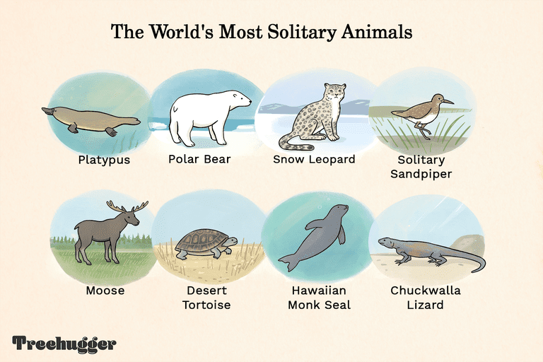 world's most solitary animals including platypus and polar bear illustration