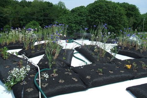 Living garden on the dome's roof