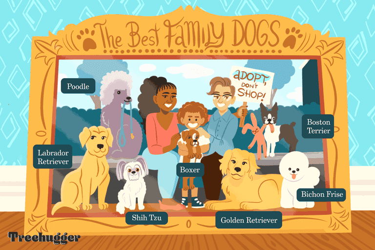 the best family dogs illustration