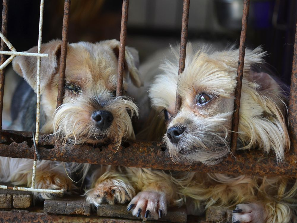 puppies in metal cage