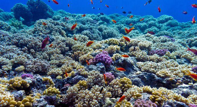 8 técnicas creativas para mantener vivos los arrecifes de coral