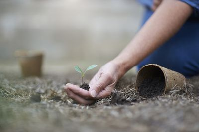 Close up of hand holding young seedling in garden