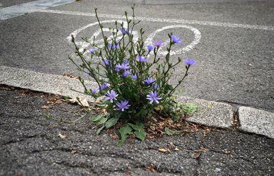 wildflowers on sidewalk