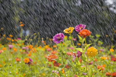 Summer rain in a garden filled with colorful flowers