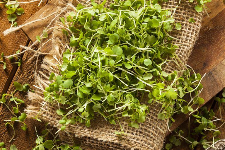 9 Microgreens llenos de Meganutrientes