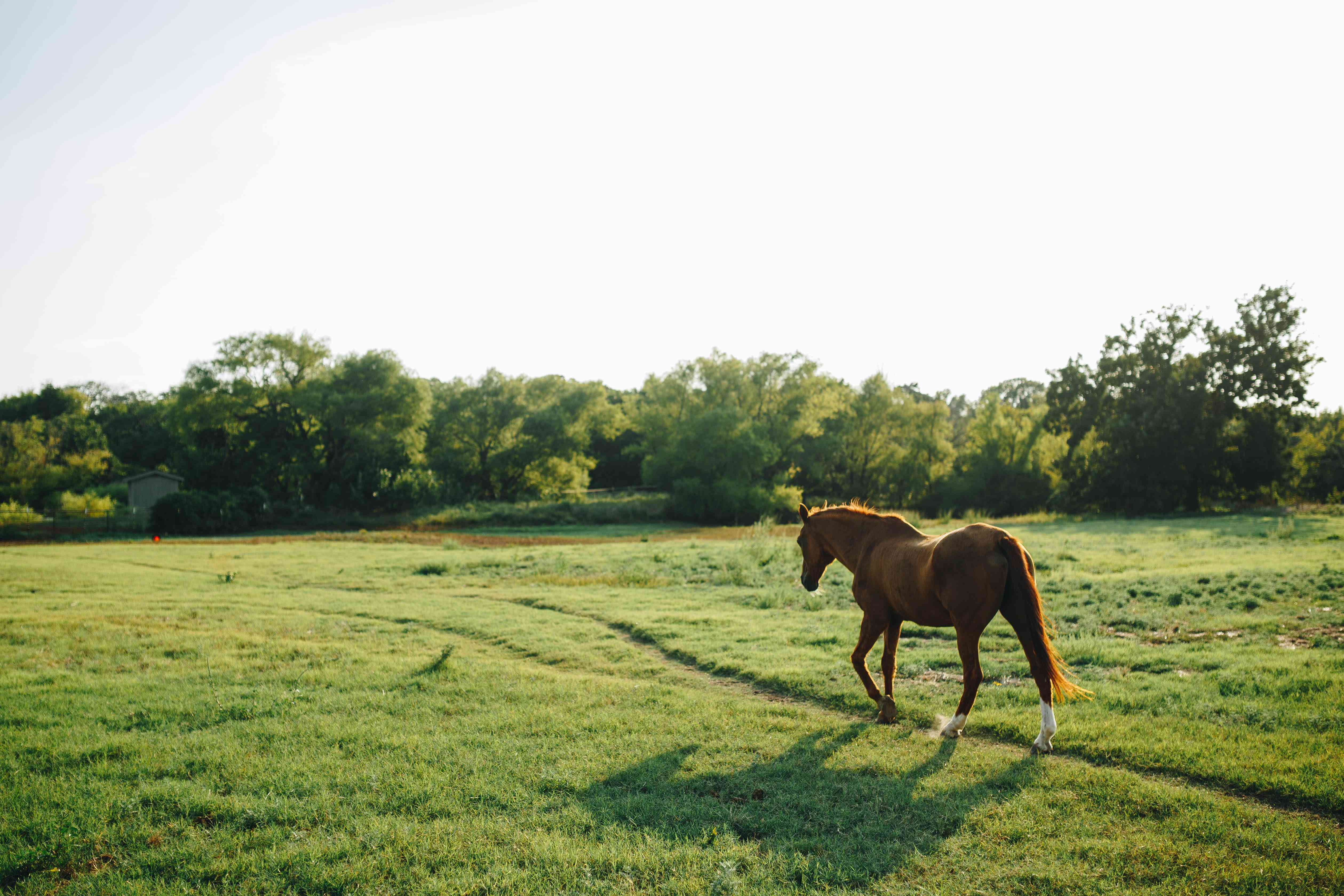 brown horse scampers in open field