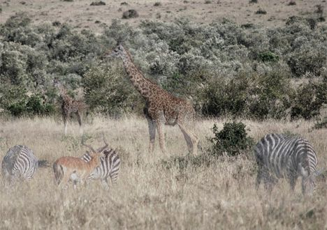 african mammals disappear photo
