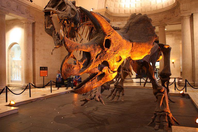 Dinosaur skeleton fully posed for museum display