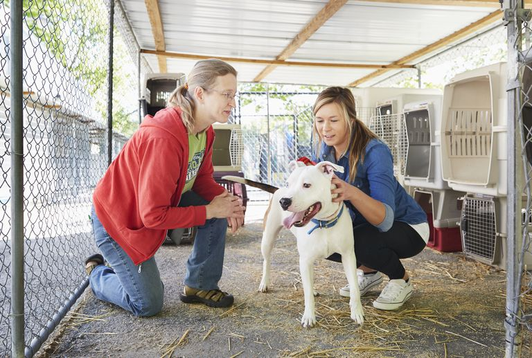 Volunteer showing a potential adopter a dog