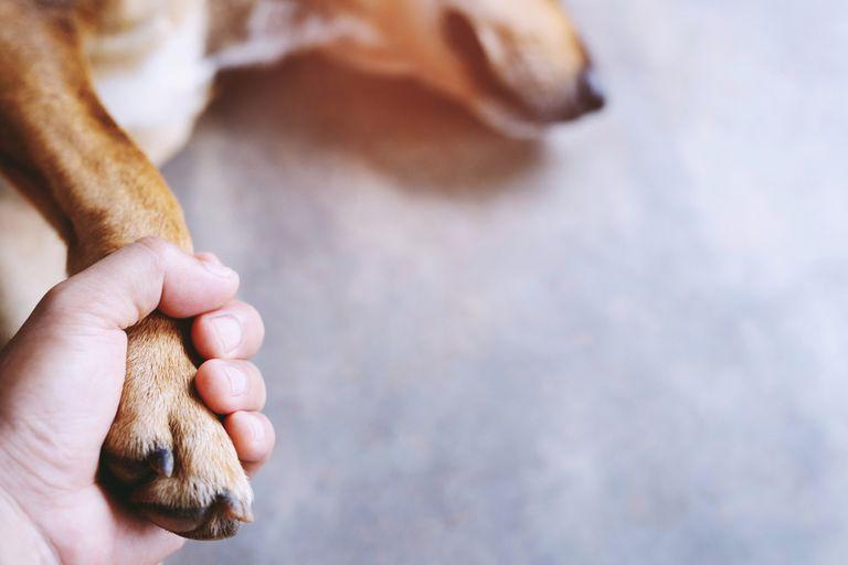 Qué hacer con los restos de una mascota querida