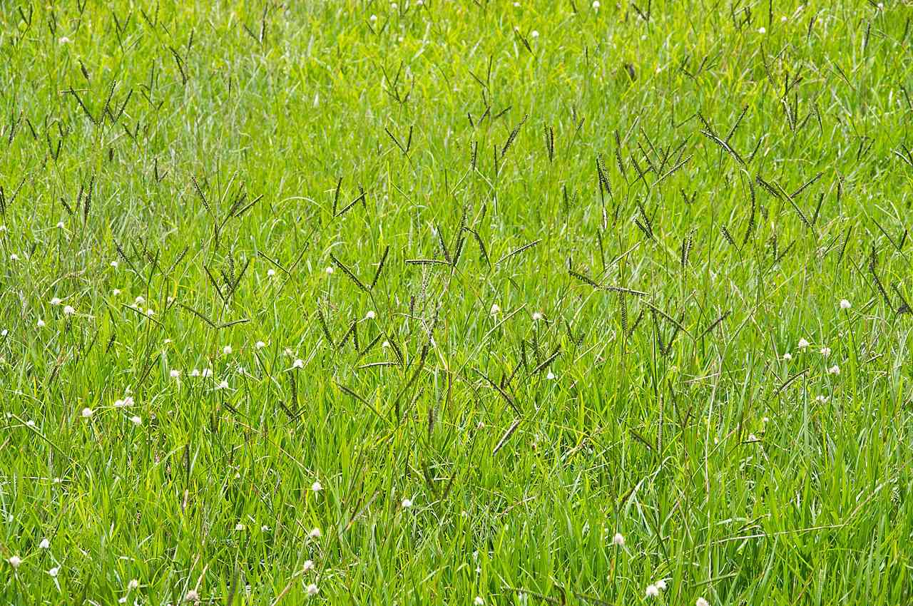 A field of unmowed, bright green grass