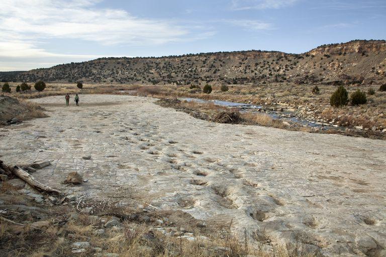 A set of dinosaur tracks in a desert landscape