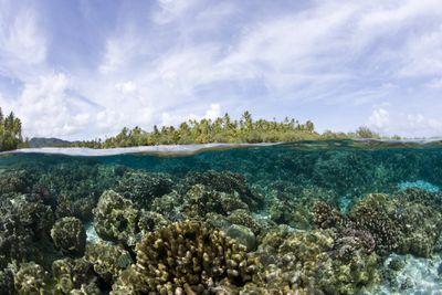 Half underwater and half sky showing coral reefs.