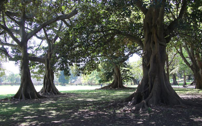 Grove of trees in the sunlight