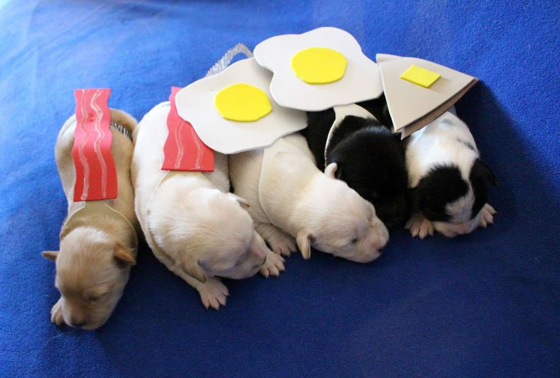 Tiny Puppies In Tiny Costumes It S All You Really Need This Halloween