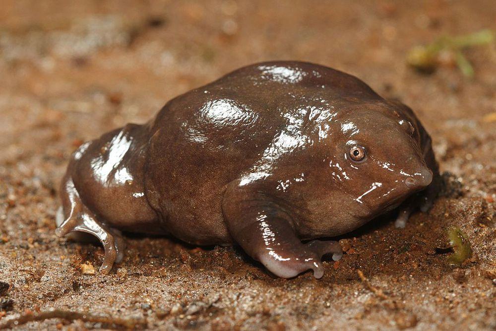 A slimy purple frog on sandy earth