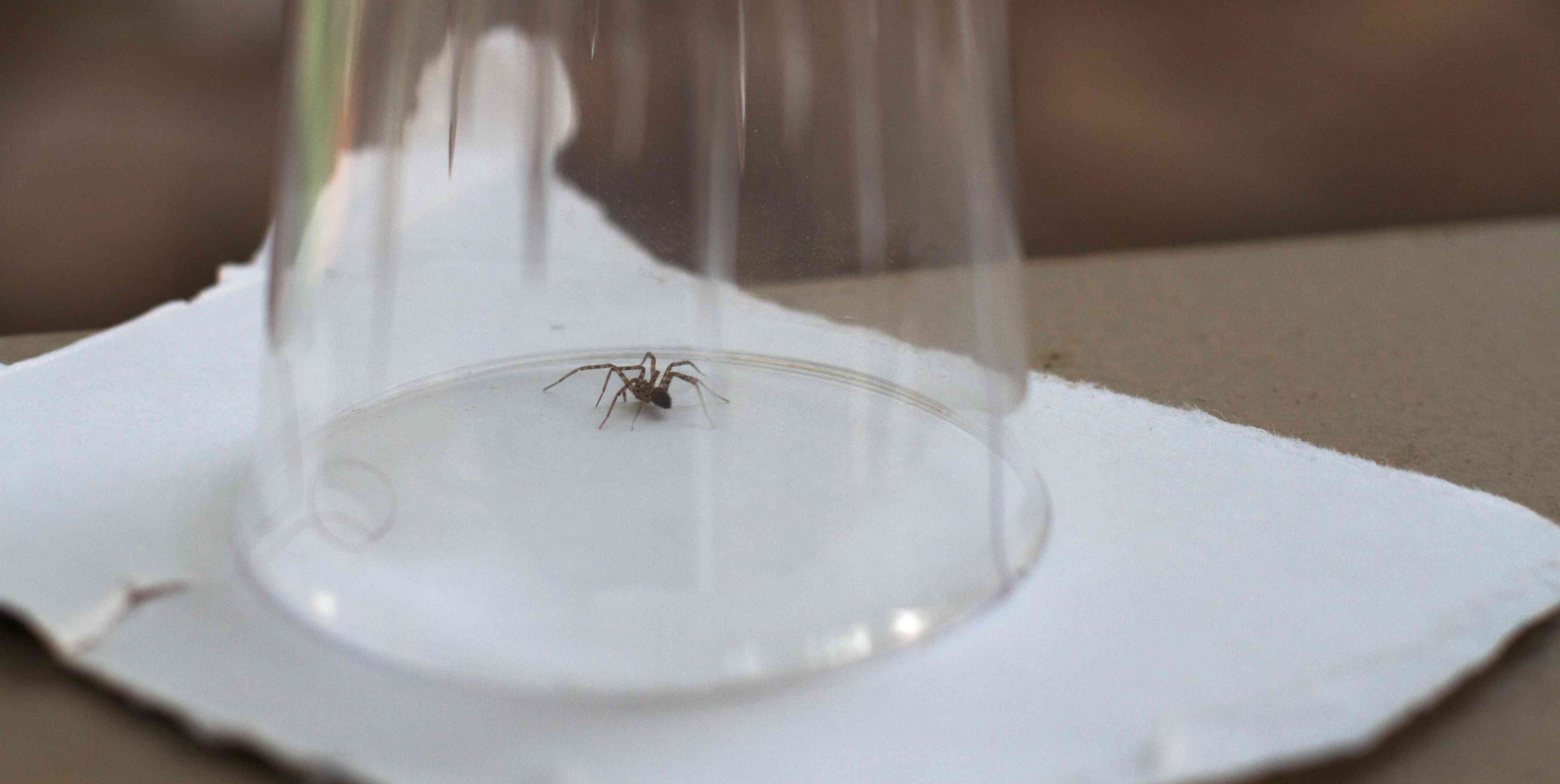 spider trapped in a cup or glass