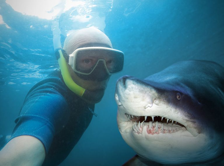 snorkler takes selfie with great white shark