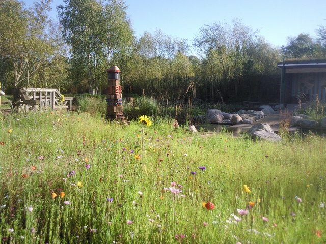 rain garden with flowering meadow